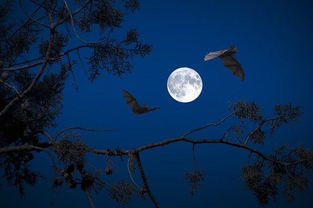 Luna piena: gli effetti sull'uomo